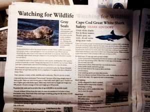 Gray seals and great white shark safety