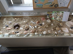 Cape Cod - Hands-on Display of Shore Life