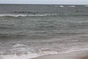 Coast Guard Beach - Gray Seals