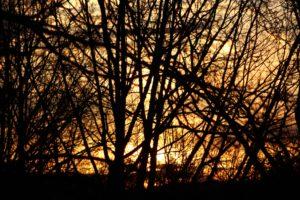 North Georgia Sunrise Peaking through the Cracks in the Trees